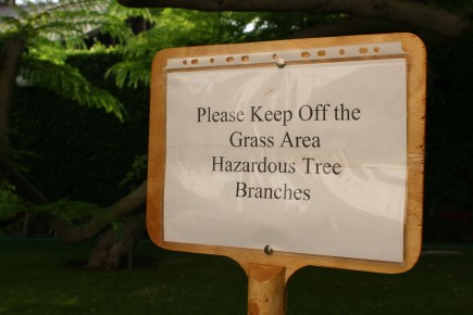 hazardous trees