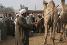 stick man with camel