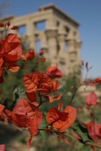 philae flowers
