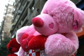pink bear zamalek