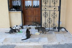 selcuk cats