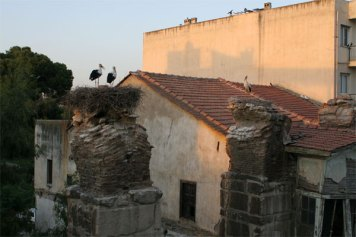 Storks again