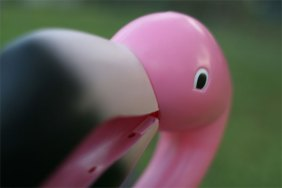 Lawn Flamingo closeup