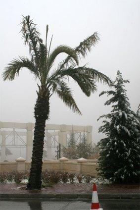 Snow Amman 3