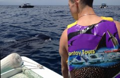 A whale shark feeding off the stern of the boat.